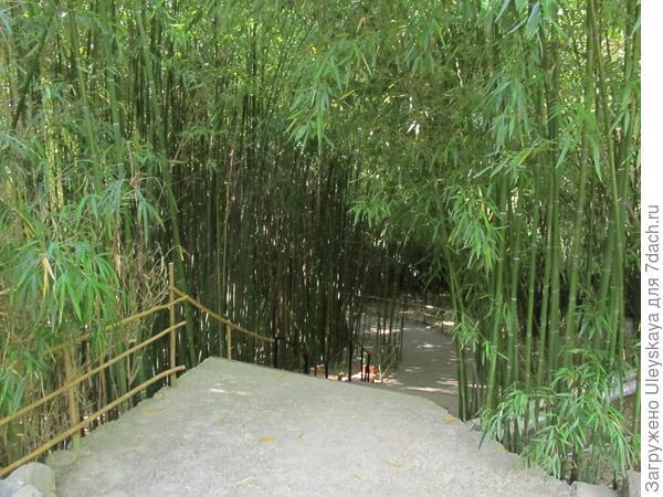 Вековая бамбуковая роща Приморского парка.