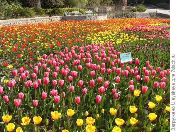 Выставка тюльпанов Никитского ботанического сада, 9 апреля