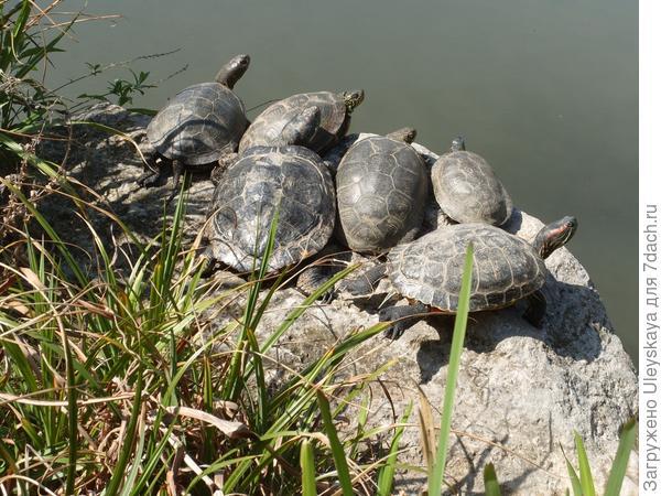 6 черепах
