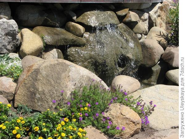 Растения соразмерны величине рокария