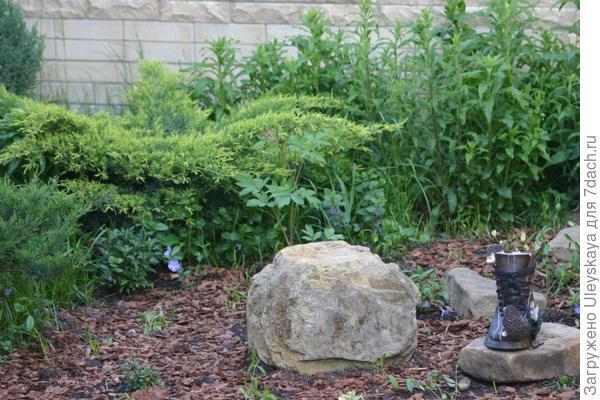Соблюдаем экологические требования растений к свету, влаге, температуре, почвам