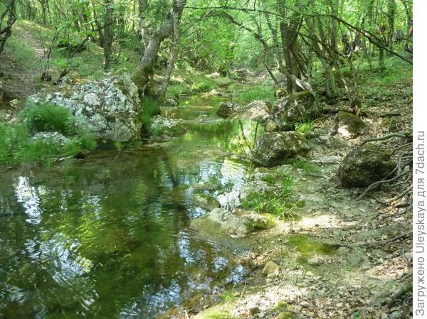 Чудесный лесной пейзаж