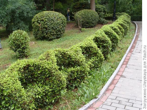 Топиарные формы парка