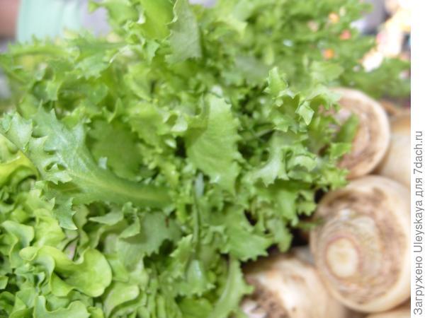 Эндивий на овощном рынке