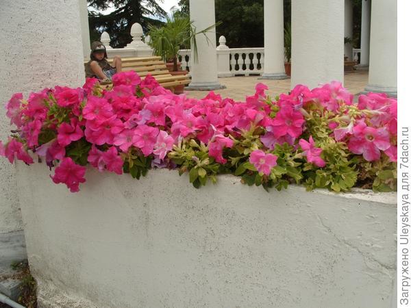 Цветочница с петунией садовой