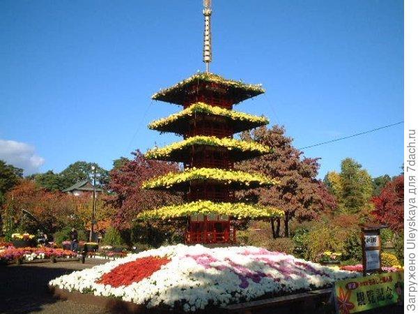 Пагода из хризантем