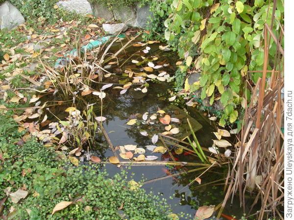 На юге в водоемах остаются зимовать почти все растения