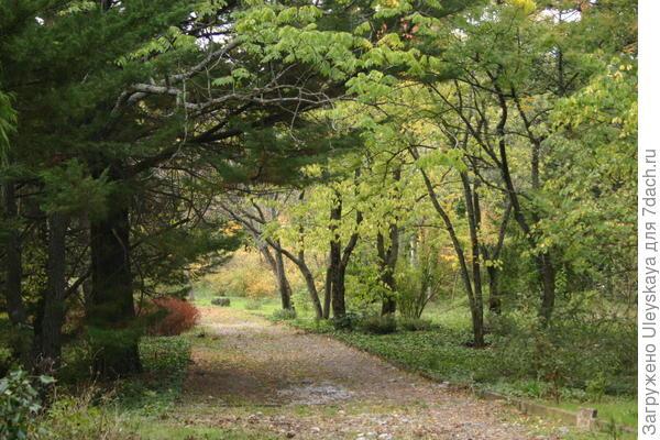 Осень в парке Монтедор Никитского ботанического сада