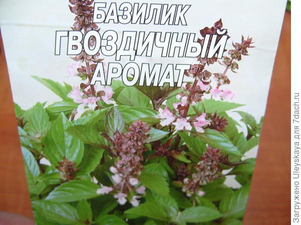 Базилик садовый сорт Гвоздичный Аромат