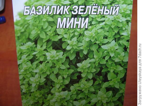Базилик садовый сорт Мини