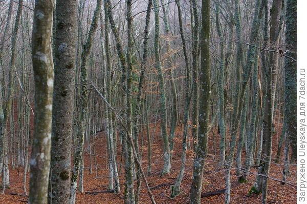 Дубово-буково-грабовый лес