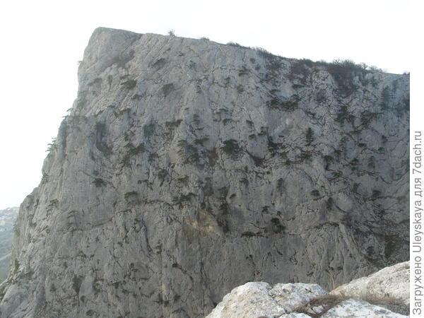 Сосны-скалолазки