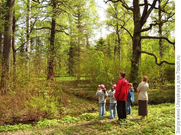 Многоликие силуэты деревьев завораживают всю семью, вызывая различные чувства