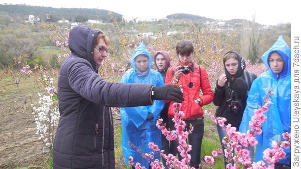 У цветущих декоративных персиков в Никитском ботаническом саду. Мастер-класс ведет Лариса Дмитриевна Комар-Темная