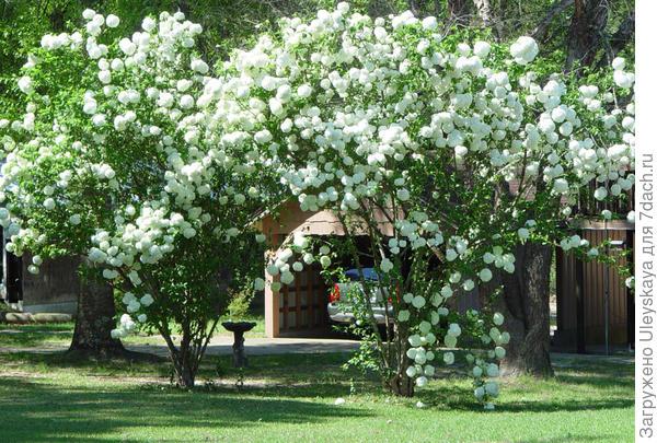 Арка из калины, фото сайта msucares.com