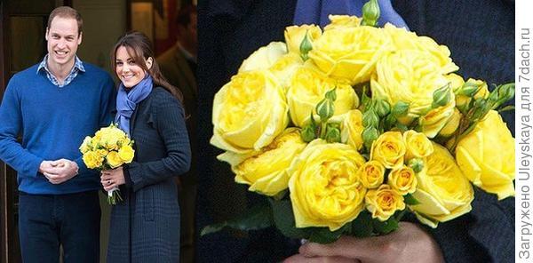 Королевский выбор – романтические розы Дэвида Остина, фото сайта vk.com