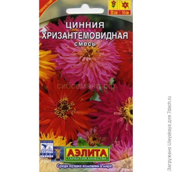 Цинния изящная сортотип Хризантемовидная Смесь, фото с сайта xn----8sbkc1ctk5a.xn--p1ai