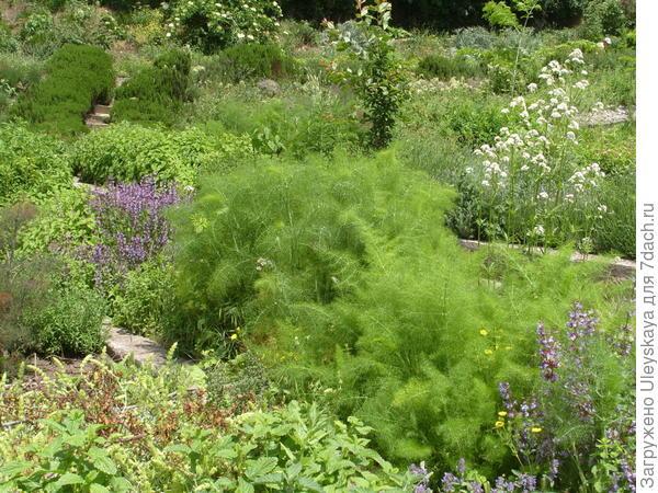 Растут травы на известьсодержащих почвах