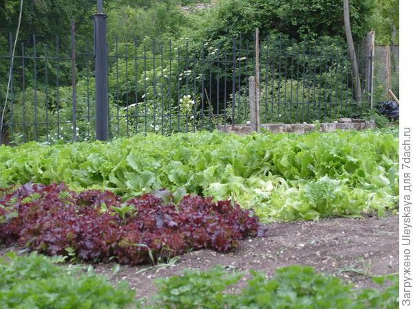 Огород на территории Топловского женского монастыря, Крым