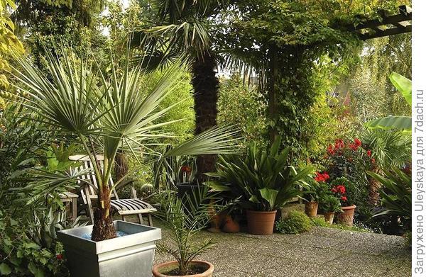 Пальмы в кадках, фото сайта landscape-project.com