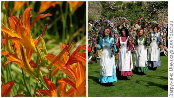Цветет лилейник гибридный сорт Queen of May, справа в майский день на празднике в Англии принято выбирать королеву и короля мая, фото сайта www.justenglish.ru