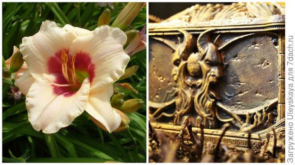 Слева цветок сорта Pandoras Box в моем объективе, справа ящик Пандоры, фото сайта vilingstore.net