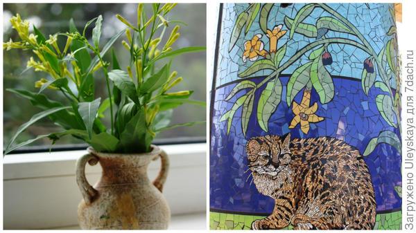 Слева цеструм Парка в небольшой вазе, справа цеструм Парка на старинной гравюре, фото сайтаhttp://www.mosaicartnow.com/wp-content/uploads/2013/03/Guiña.jpg