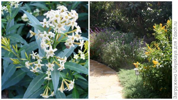 Слева цеструм Парка в моем объективе, справа он в композиции, фото сайта www.imagejuicy.com
