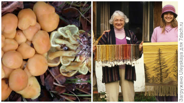Грибы-красители и их использование, фото сайта http://www.namyco.org/history_mushrooms_for_color.php