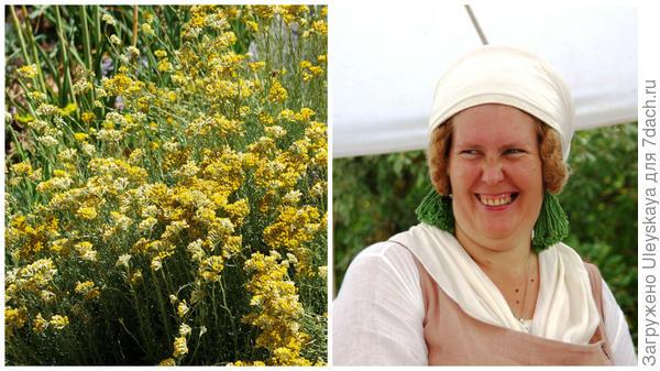 Бессмертник итальянский – ароматизатор, женщина из Крымского исторического фестиваля, ведущая натуральное хозяйство