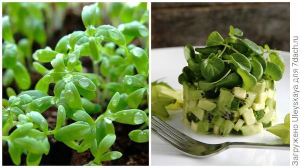 Кресс-салат, фото сайта, povar.ru применение, фото сайта xcook.info
