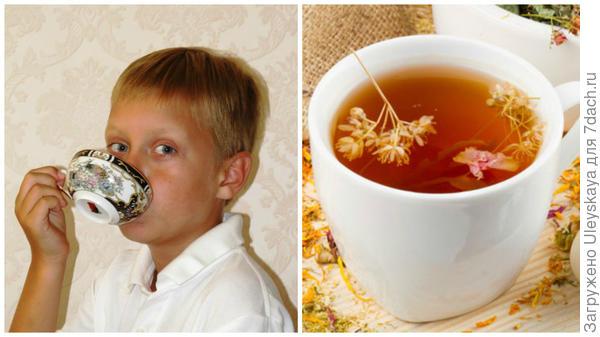 Наш гость за чашечкой чая, чай, фото сайта fito-store.ru