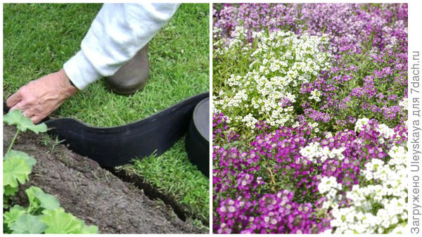 Ограничение трав бордюрной лентой, фото сайта greensector.ru, ароматная лобулярия