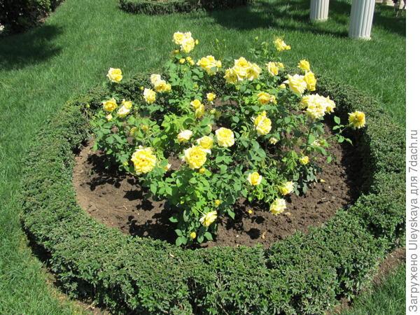 Розы в кругах