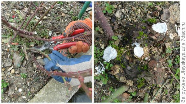 Обрезаем и замазываем белой антисептической садовой краской
