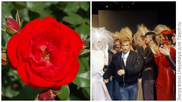 Роза сорт Montana, фото сайта floribunda.ru, Клод Монтана - французский модельер, фото сайта Vanity Fair