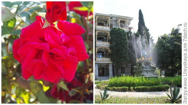 Роза сорт Fontaine и знаменитый фонтан Ночь в Гурзуфском парке, Крым