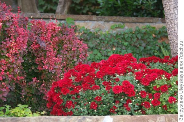 Осенний дуэт в красном