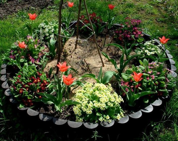 Клумба с первоцветами