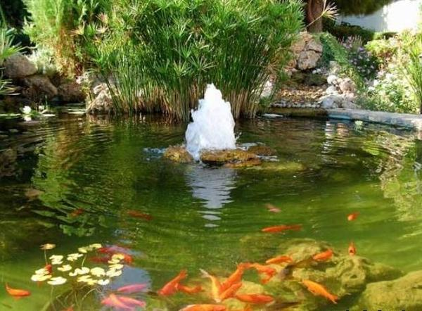 Пруд с фонтаном и рыбками