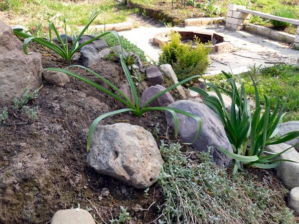 Камни на склоне