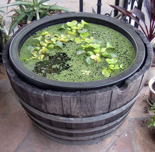 Мини-болотце для сада и террасы