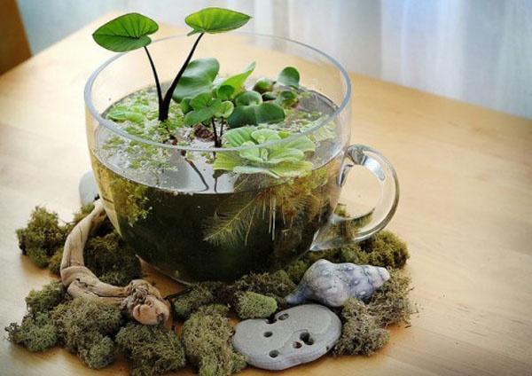 Мини-водоем в чашке