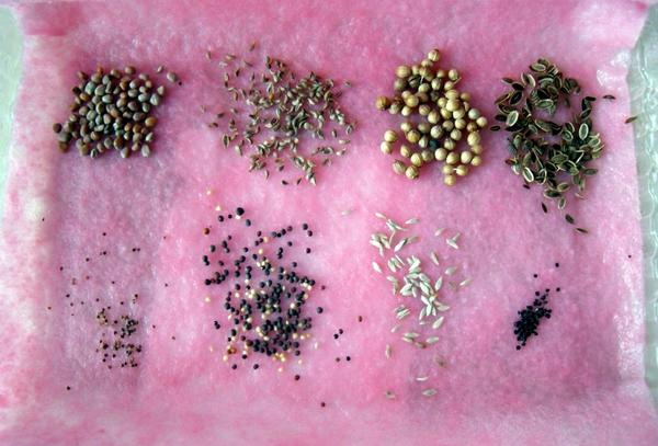 Предпосевная подготовка семян