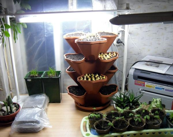 Досвечивание растений в домашнем огороде