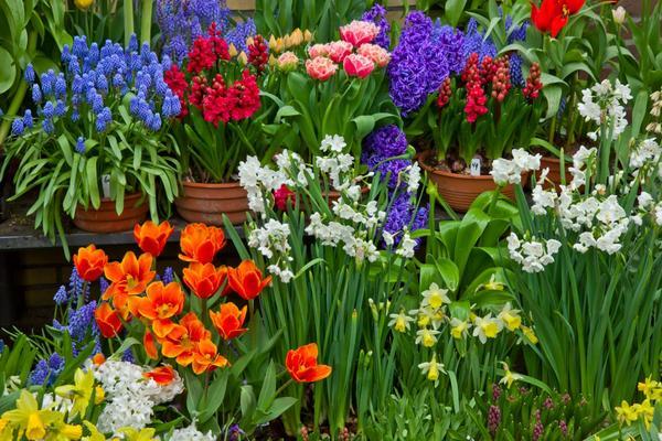 Много красивых цветов