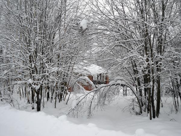 Деревца гнутся под снегом