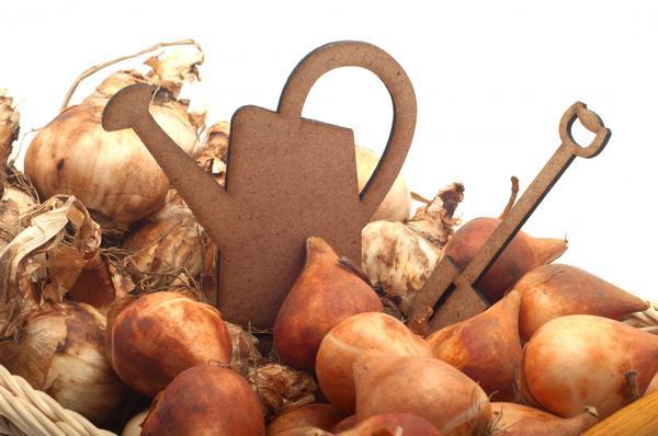 Луковицы в корзинке