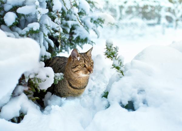 Кот в заснеженном саду