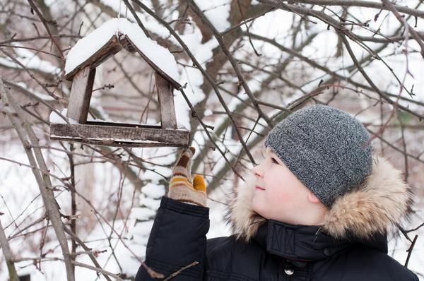 Мальчик возле птичьей кормушки